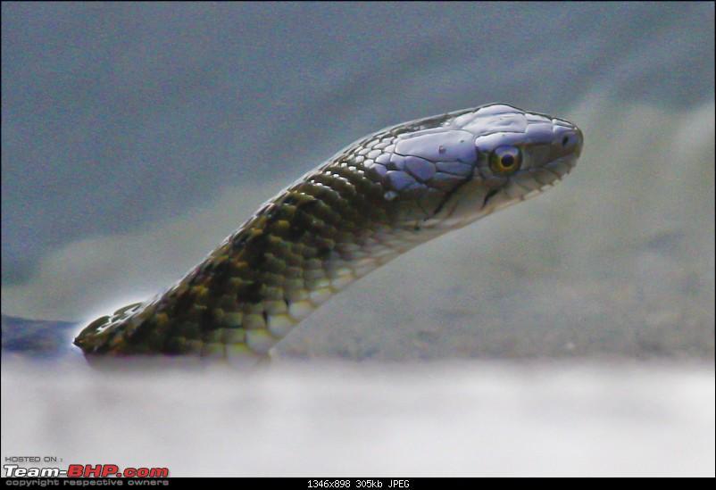 Snakes!-_mg_2500.jpg