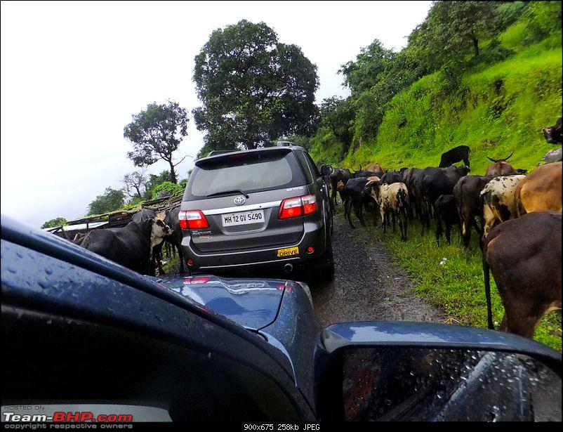 Seven Fortuners, One Land Rover & Rajmachi Revisited-1.jpg