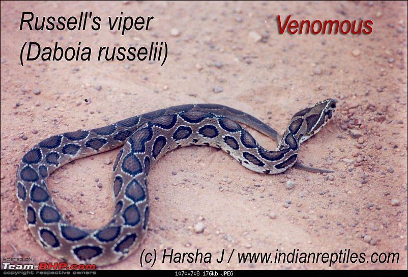 Snakes!-rusfull_.jpg
