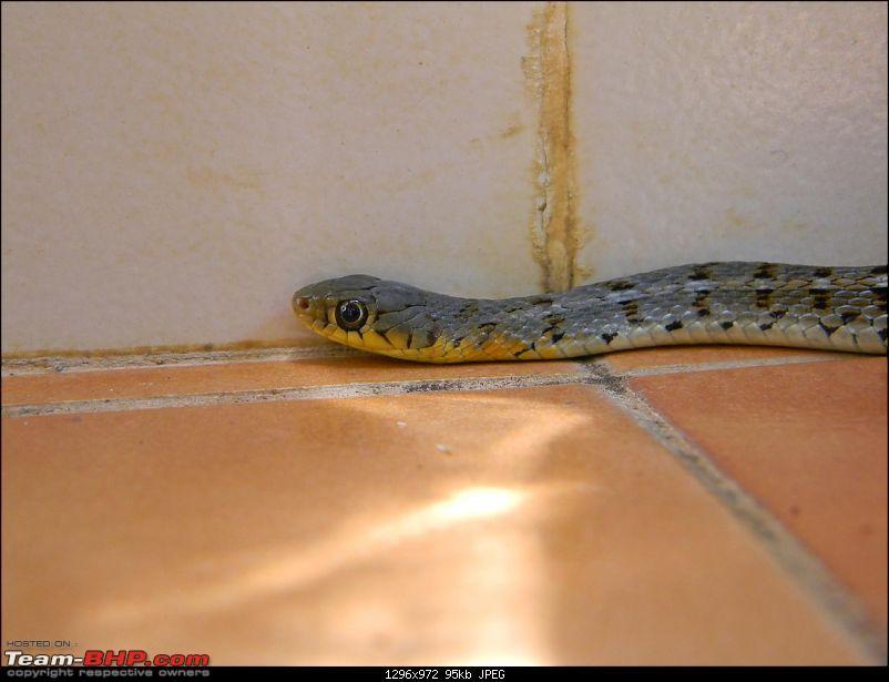 Snakes!-dscn0879.jpg