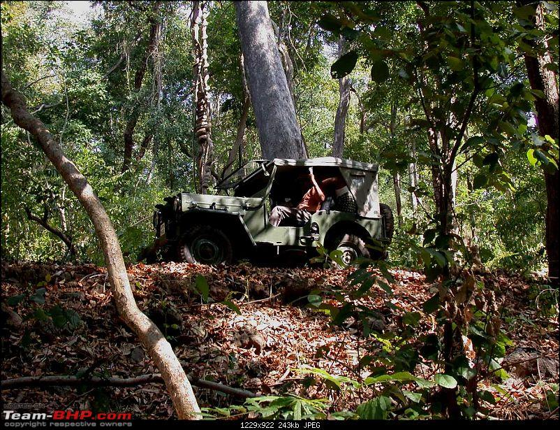 cj3b in the forest-forest-camp-13.jpg