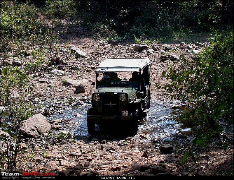 cj3b in the forest-forest-camp-18.jpg