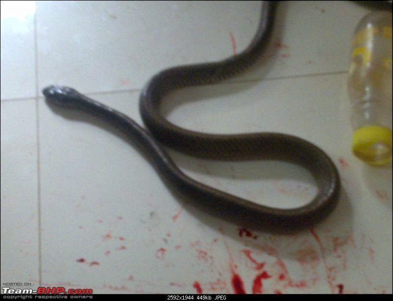 Snakes!-26022011441.jpg