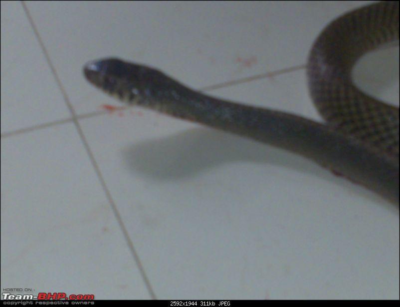 Snakes!-26022011442.jpg