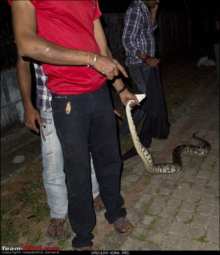 Snakes!-pb301346.jpg