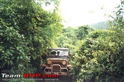 Name:  Jungle400.jpg Views: 4193 Size:  29.8 KB