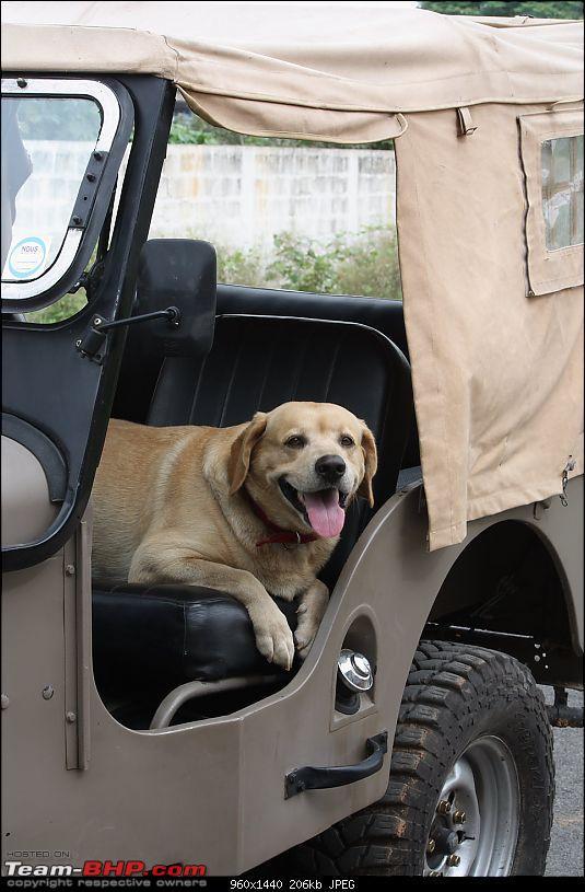 Got Jeep! CJ3B Hurricane.-img_2410.jpg