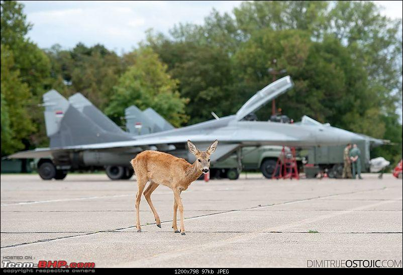 MiG-29 Fulcrum : The balance rests on us-bambi.jpg
