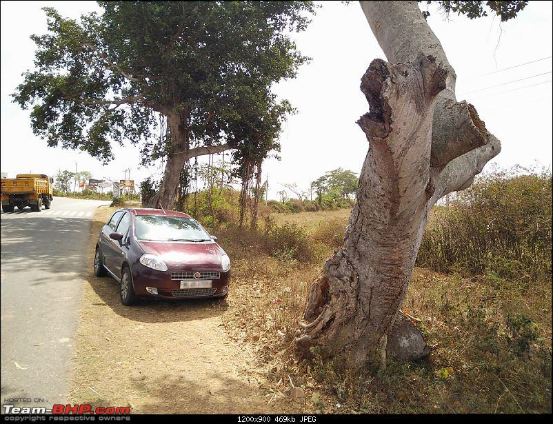 My Fiat Punto 90Hp Accident: Head-on collision with a Tree-img_20160228_141301776.jpg