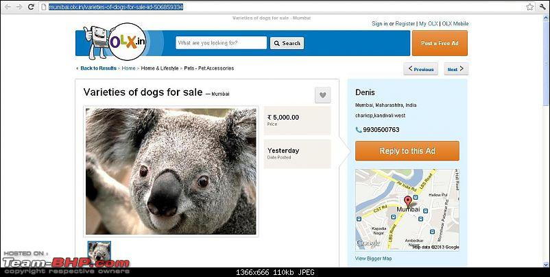 The Official Joke thread-dogs.jpg