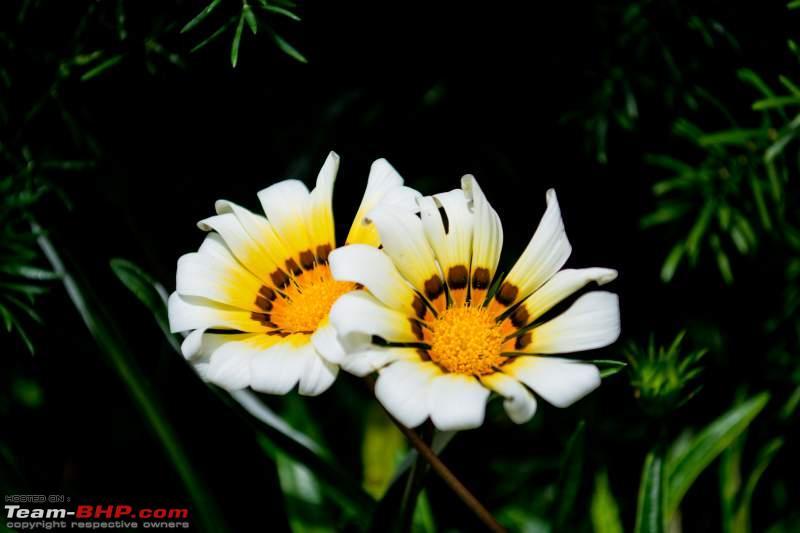 Name:  DSC_0040__1376396396_159.245.48.2.jpg Views: 781 Size:  32.9 KB
