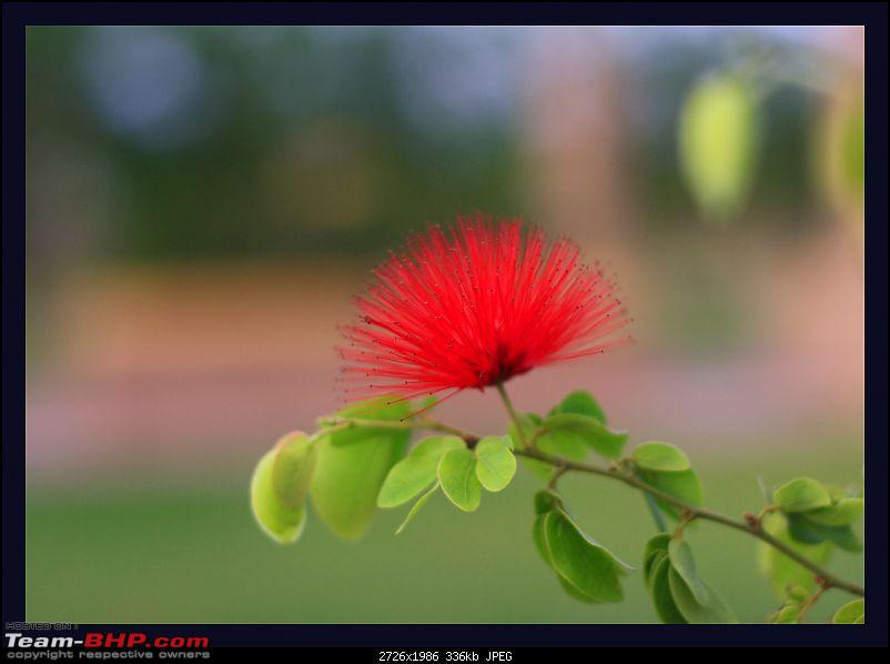 The Official non-auto Image thread-redflower.jpg