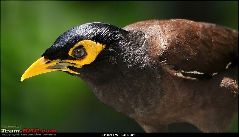 The Official non-auto Image thread-myna-portrait-1_filtered-copy.jpg