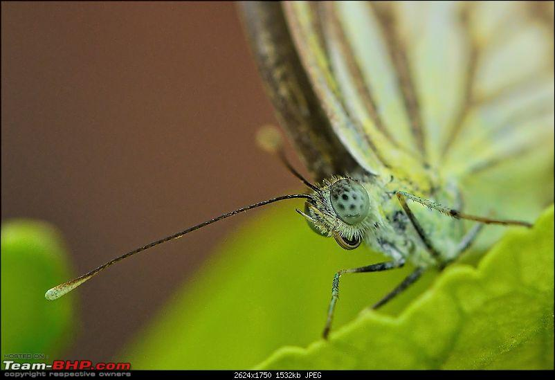 The Official non-auto Image thread-pioneer-white-butterfly-copy.jpg