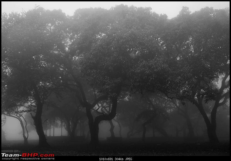 The Official non-auto Image thread-foggy-afternoon.jpg