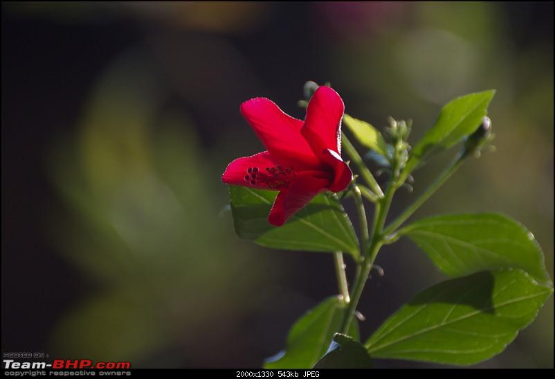 The Official non-auto Image thread-hibiscus.jpg