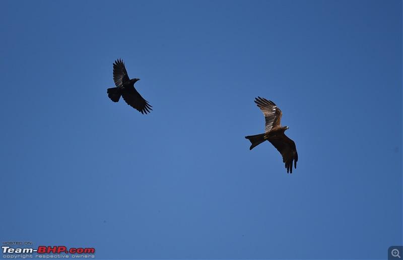 The Official non-auto Image thread-kite-raven.jpg
