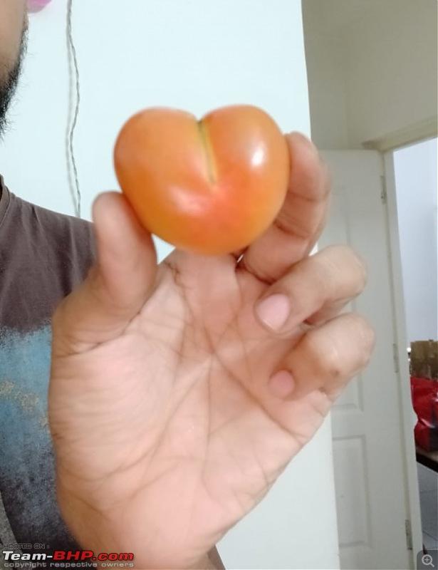 The Official non-auto Image thread-tomato.jpg