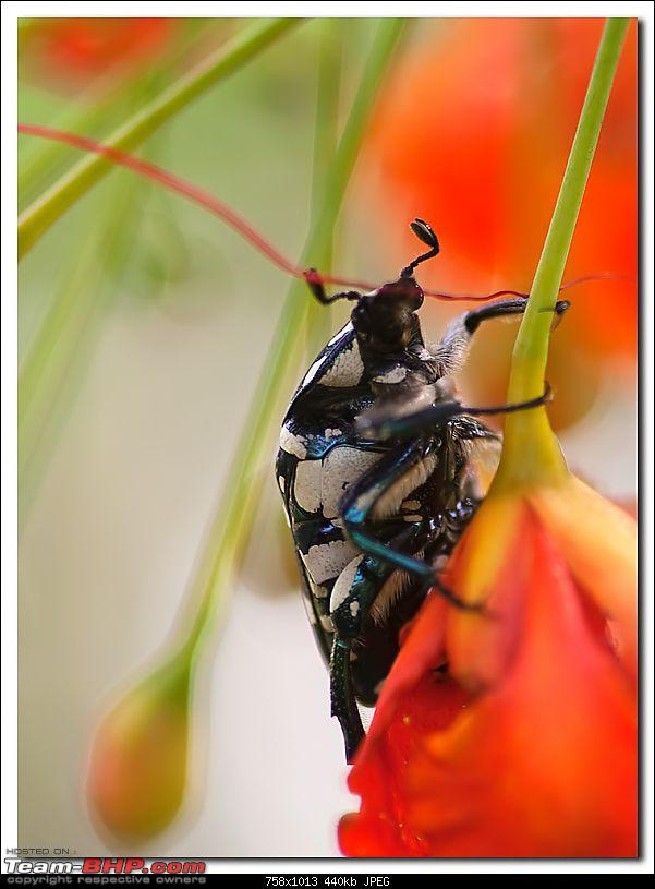 The Official non-auto Image thread-beetle.jpg