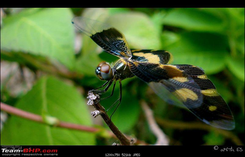 The Official non-auto Image thread-dragonfly_klubclass_amith_es.jpg