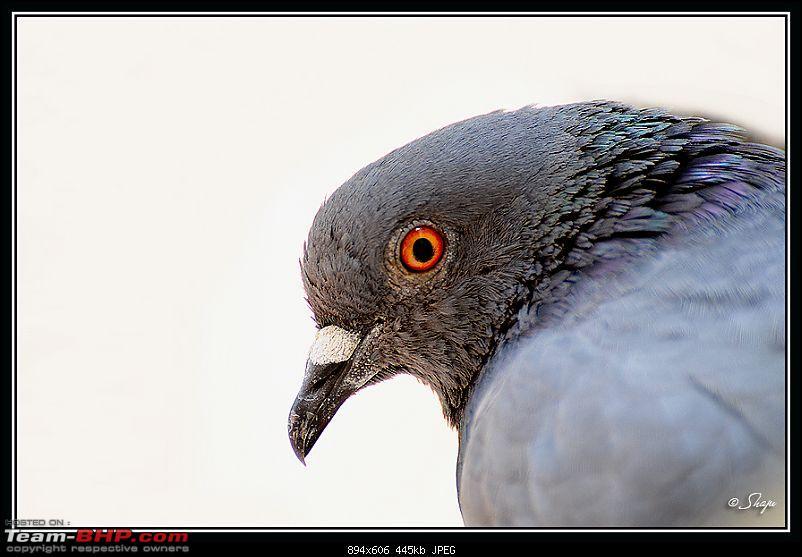 The Official non-auto Image thread-dove.jpg