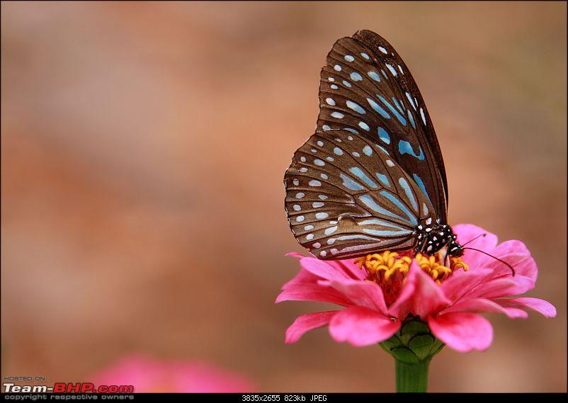 The Official non-auto Image thread-blue-butterfly.jpg