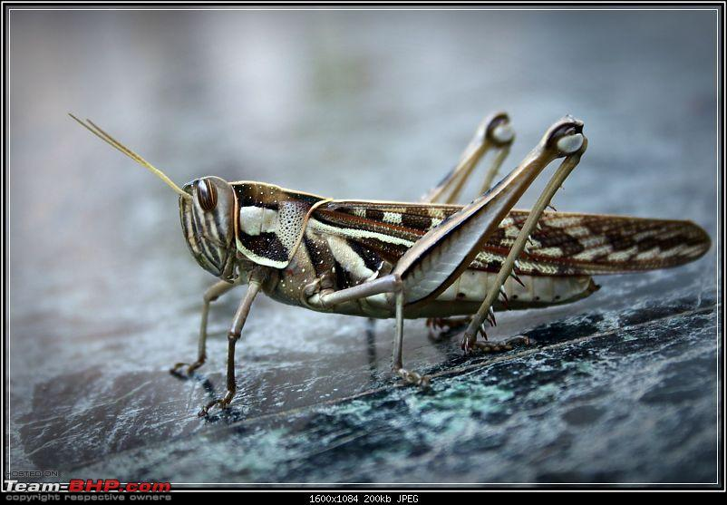 The Official non-auto Image thread-grasshopper.jpg
