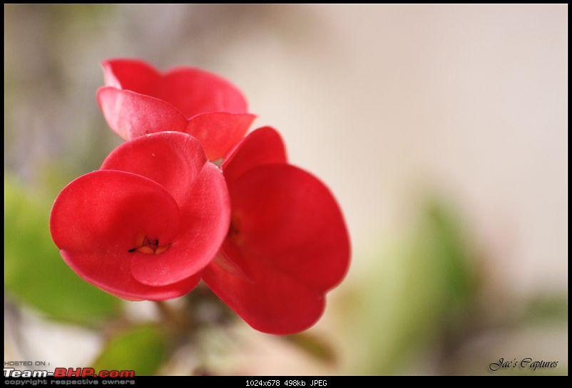 The Official non-auto Image thread-flower.jpg