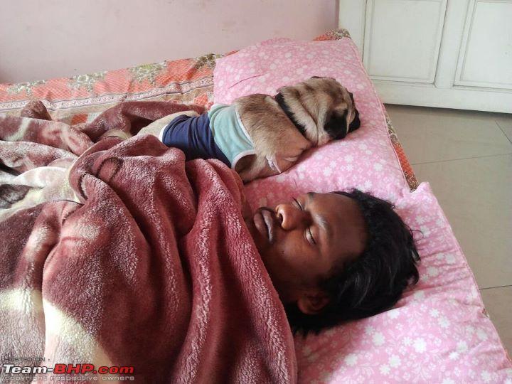 Name:  Anand Dog.jpg Views: 1855 Size:  68.2 KB