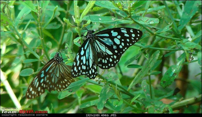The Official non-auto Image thread-butterfly290.jpg