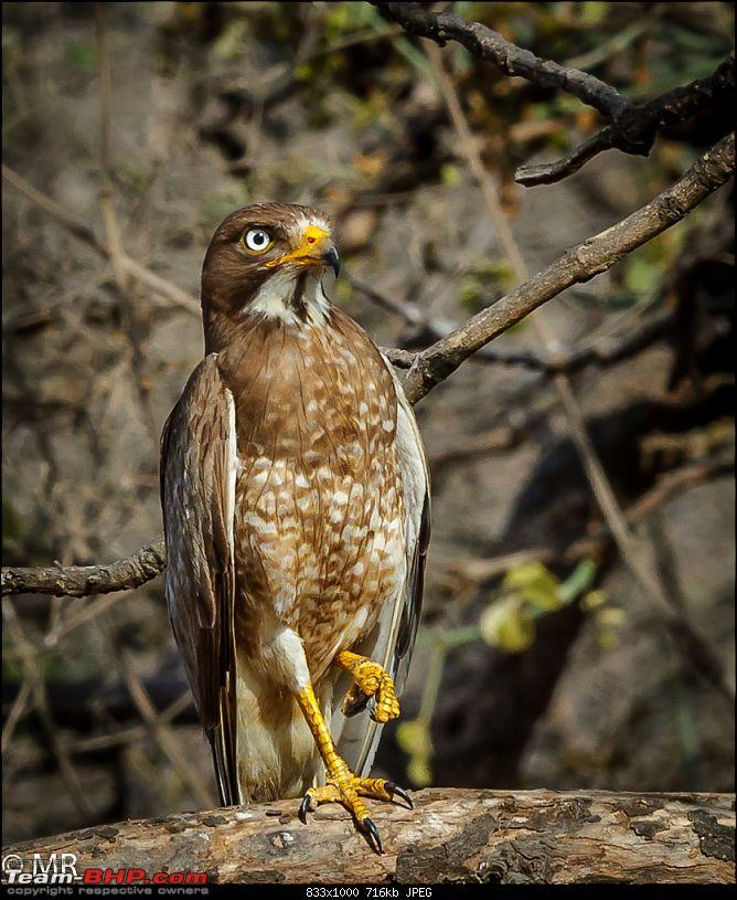 Gear for the Serious Amateur Photographer-crested-serpent-eagle.jpg