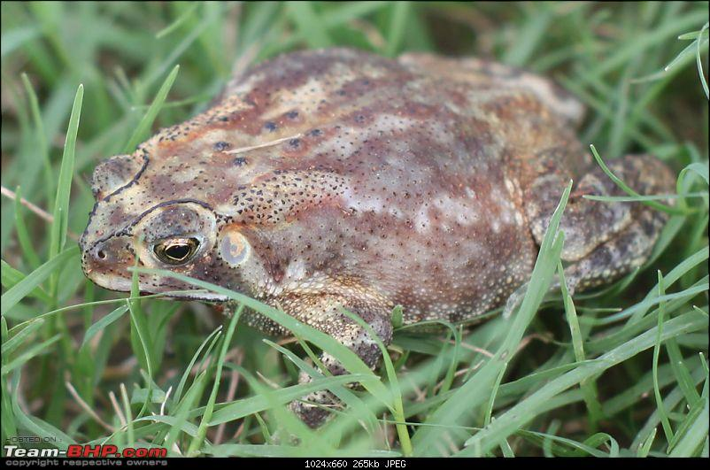 The DSLR Thread-toad.jpg