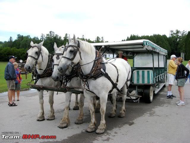 Name:  HorseCarriageTour.jpg Views: 627 Size:  51.7 KB