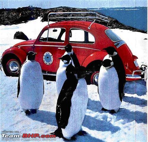 Name:  500x_Antarctica_Beetle.jpg Views: 6129 Size:  153.9 KB