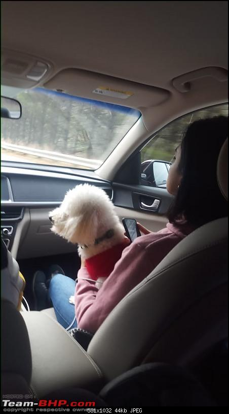 Adversity to opportunity during the pandemic | From a new Kia Optima to a used Acura MDX-optima_doggie.jpg