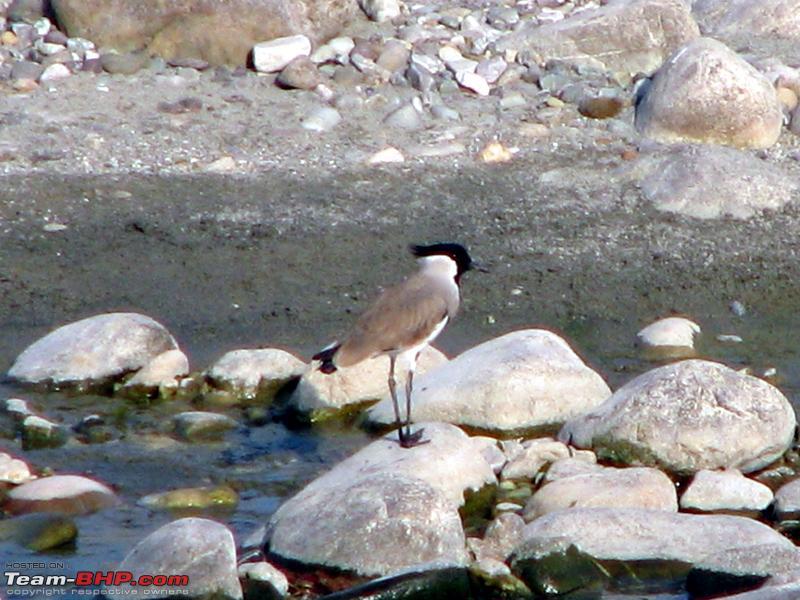 Name:  7 Bird 1.JPG Views: 3618 Size:  323.7 KB