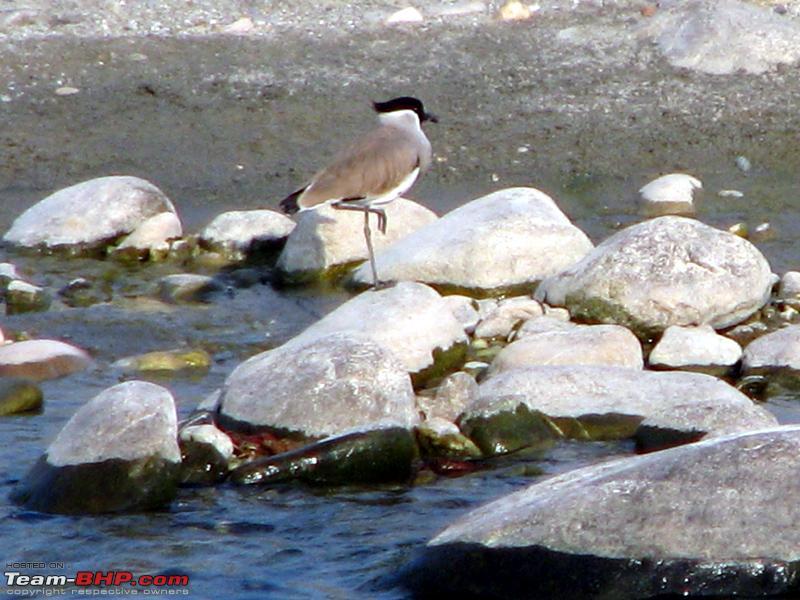 Name:  8 Bird 2.JPG Views: 3429 Size:  312.6 KB