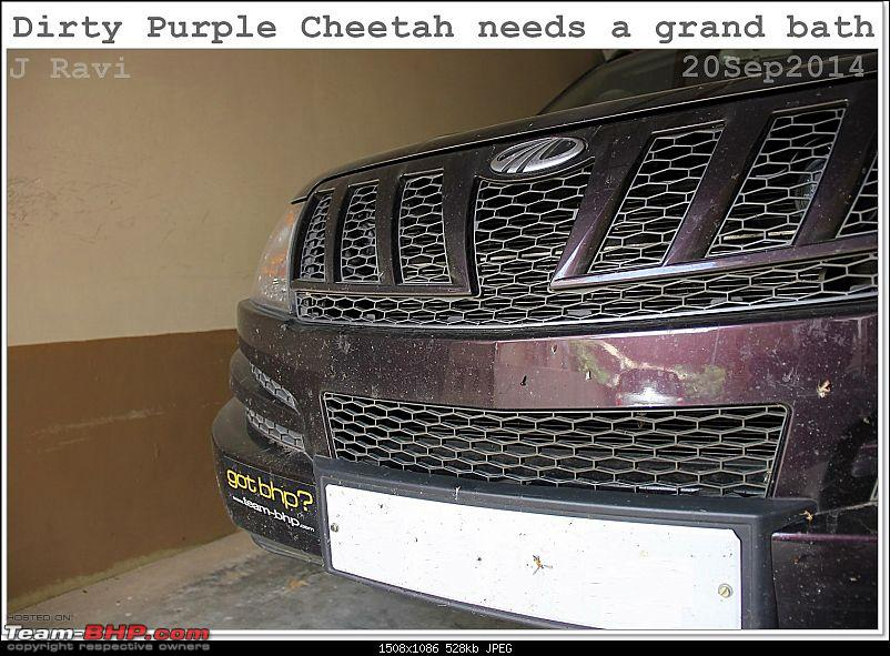 Mahindra XUV500 W8 FWD: My Pet Purple Cheetah-img_1522.jpg