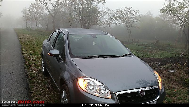 My 2014 Grey Fiat Linea 1.3L MJD-early-morning-forest.jpg