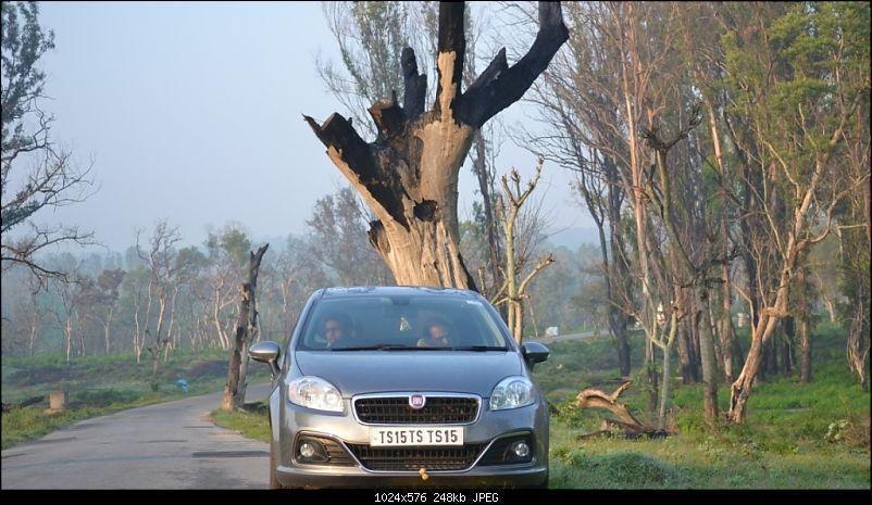 My 2014 Grey Fiat Linea 1.3L MJD-car-huge-tree.jpg