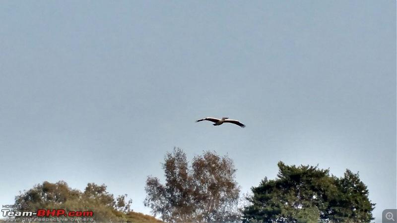 Ownership Tales - The Orange Cheetah! 2015 Mahindra XUV500 W10 FWD-pelicanflying.jpg