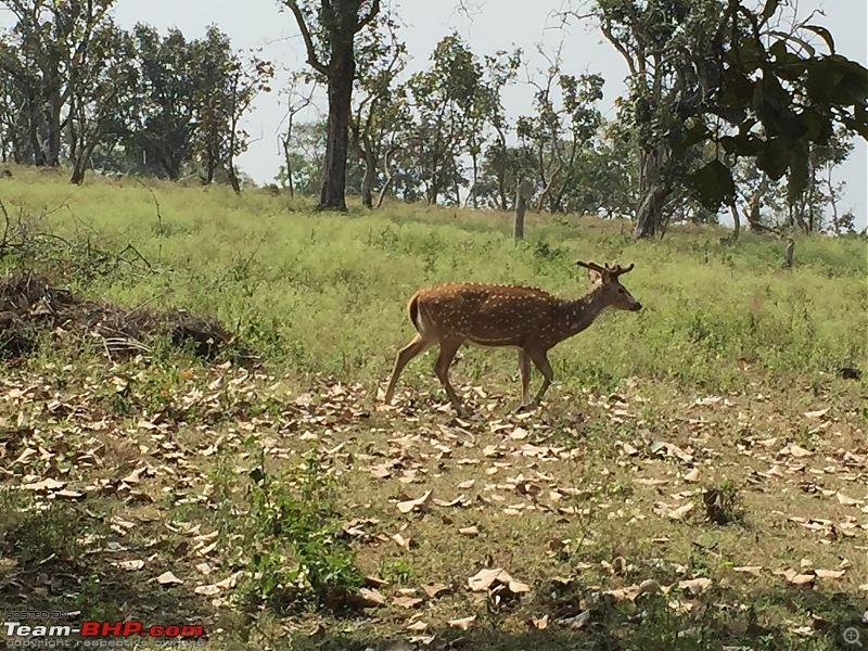 Ownership tales of the Orange Cheetah - 2015 Mahindra XUV5OO W10 FWD, 60000 km up-deer.jpg