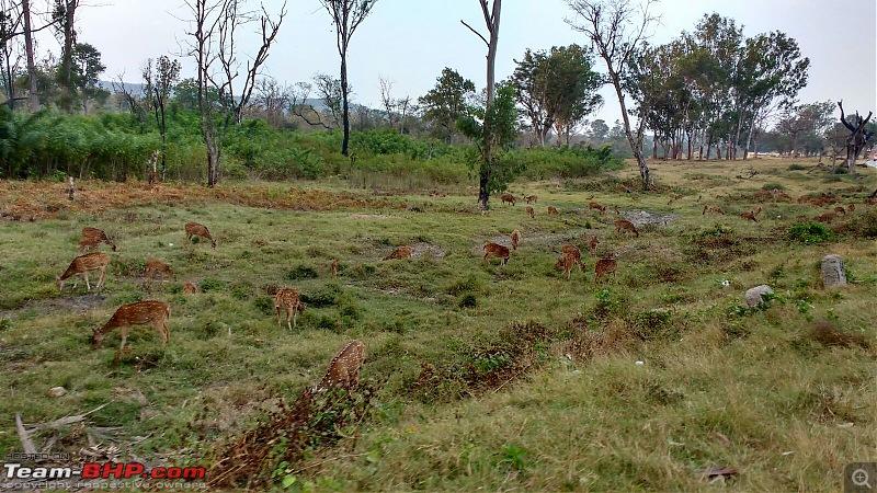 Ownership tales of the Orange Cheetah - 2015 Mahindra XUV5OO W10 FWD, 60000 km up-deers.jpg