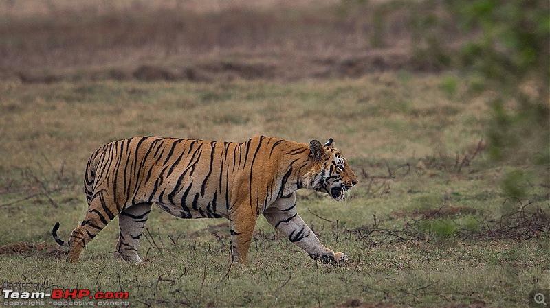 Ownership tales of the Orange Cheetah - 2015 Mahindra XUV500 W10 FWD completes 50,000+ km-_u7v1999.jpg