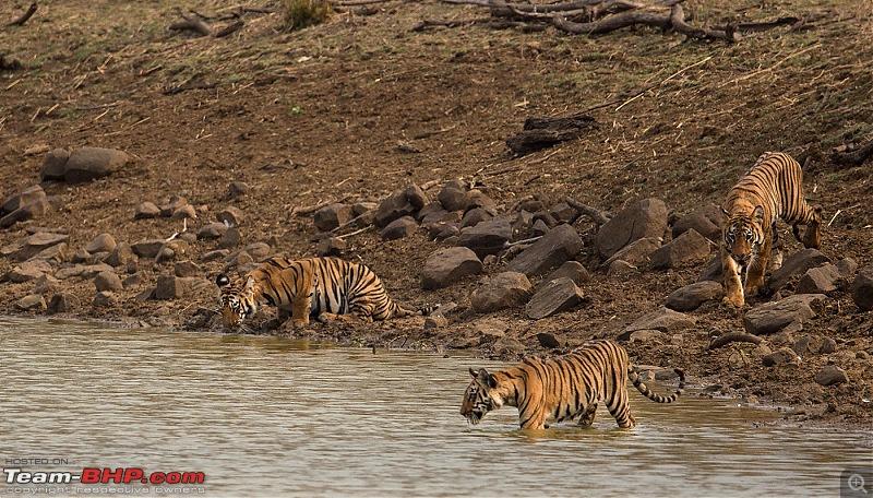 Ownership tales of the Orange Cheetah - 2015 Mahindra XUV500 W10 FWD completes 50,000+ km-_u7v2180.jpg