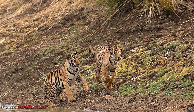 Ownership tales of the Orange Cheetah - 2015 Mahindra XUV500 W10 FWD completes 50,000+ km-_u7v2249.jpg