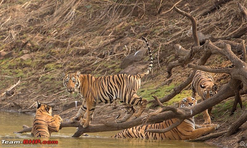 Ownership tales of the Orange Cheetah - 2015 Mahindra XUV5OO W10 FWD, 70000 km up-_u7v2277.jpg