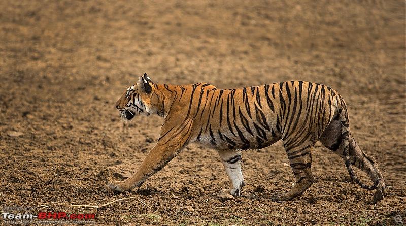 The Orange Cheetah - 2015 Mahindra XUV5OO W10 FWD. 30K km in one year!-_u7v2344.jpg
