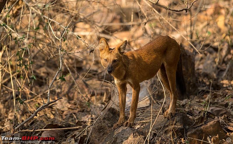 Ownership tales of the Orange Cheetah - 2015 Mahindra XUV5OO W10 FWD, 70000 km up-_u7v2381.jpg