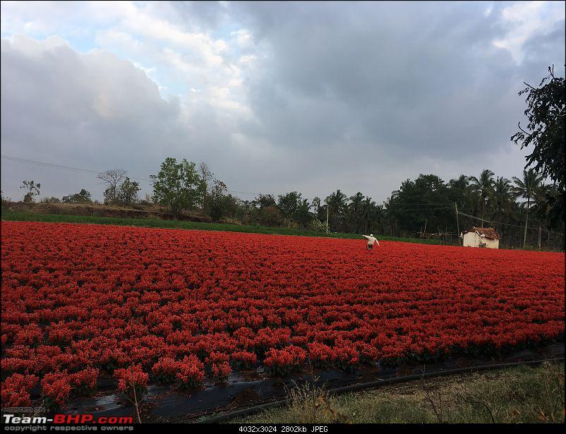 Ownership tales of the Orange Cheetah - 2015 Mahindra XUV500 W10 FWD completes 50,000+ km-flowers.jpg